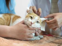 What to Understand about Neurological Disorders in Cats
